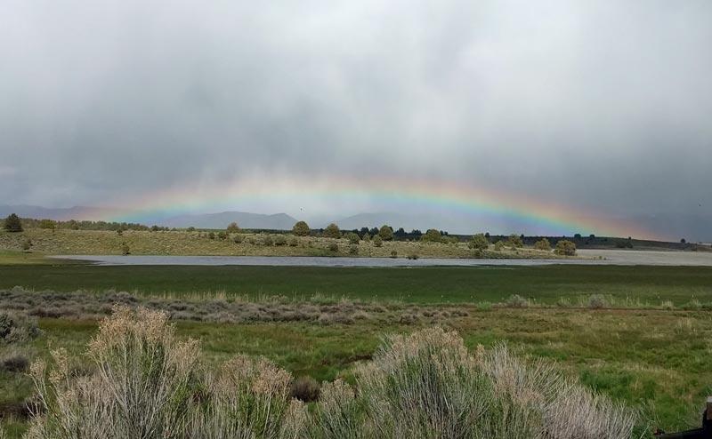 RainbowJunipers