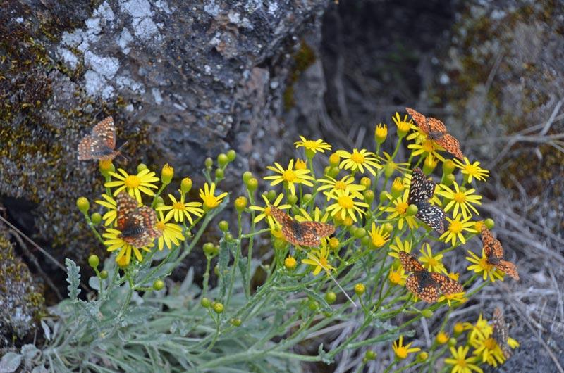 flowersbutterflies